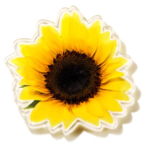 Magnet Sončnica
