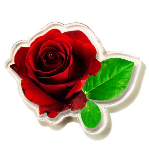 Magnet Vrtnica zate