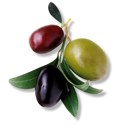 Magnet Olive